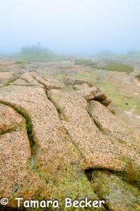 Acadia Blog-0965