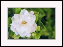 20140503-_DSC1840-framed